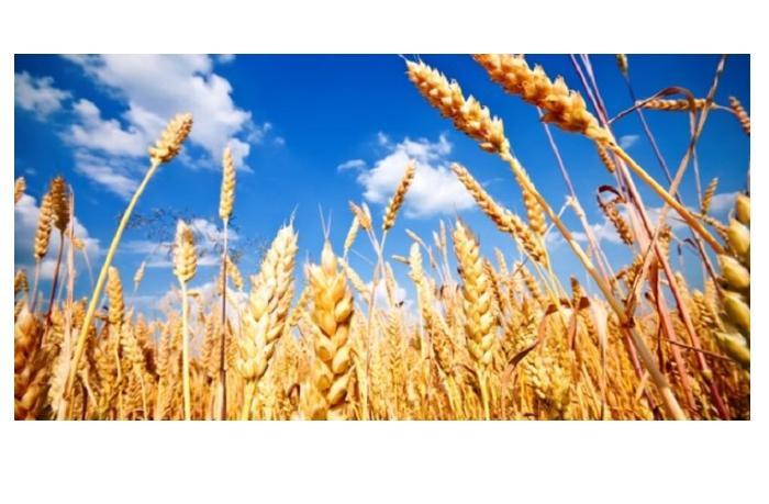 Рост цен на хлеб отложен: импорт пшеницы, муки и хлеба освободят от НДС