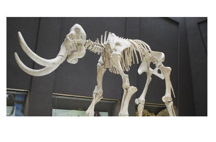 «Невероятно древнее ДНК. Эти мамонты жили, когда еще не было людей и неандертальцев» - профессор  Лове Дален