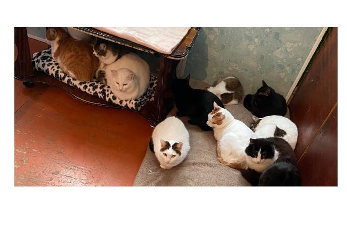 """Более 50-ти кошек в одной квартире. """"Я не могу пройти мимо них"""", - Афет Гулиева ВИДЕО"""