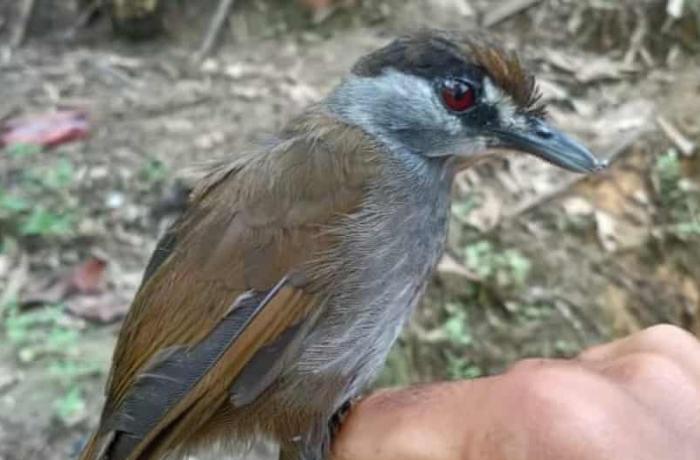 Нашли птицу, которая считалась вымершей 170 лет назад