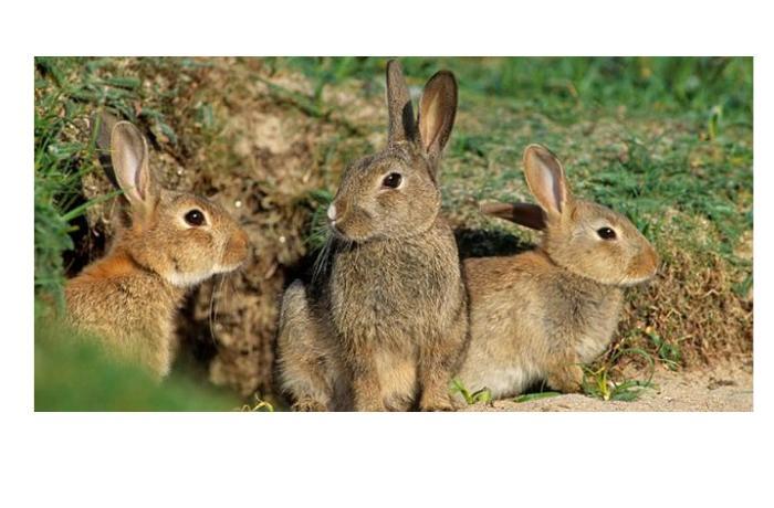 Кролики нашли древние артефакты