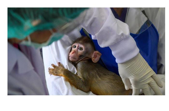 Прививку от коронавируса впервые сделали приматам в США