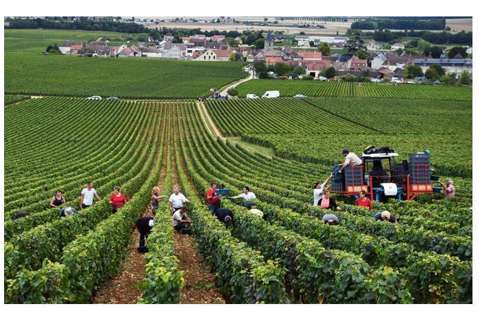 1 млрд евро выделит Франция на поддержку сельского хозяйства