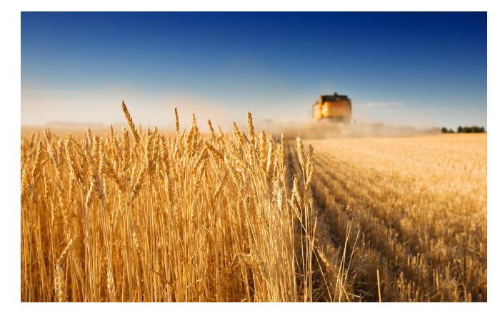 В Азербайджане аграрный сектор вырос более чем на 2%