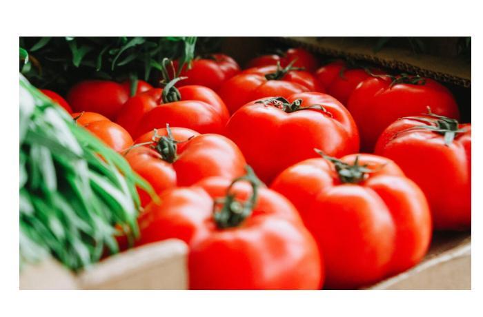 Pomidorun qiyməti nə üçün kəskin bahalaşıb?