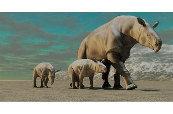В Китае обнаружены останки древнего носорога весом равного 6 африканским слонам